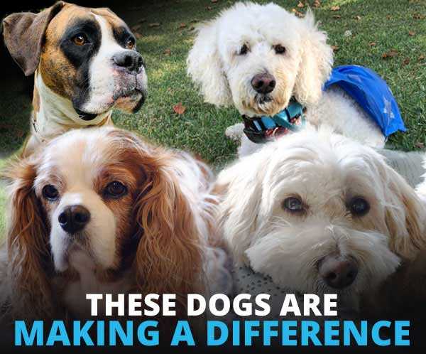 City of Hope dogs are making a difference